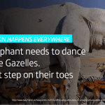 Elephant dances with gazelles