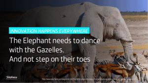 Elephant dances with gazelles